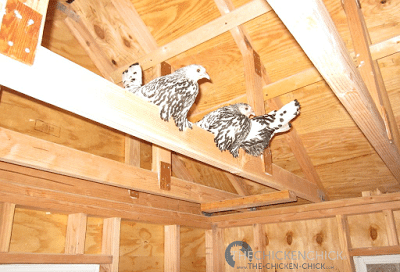 Beware the rafter-roosters.