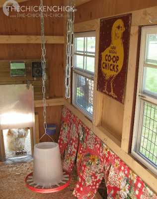 The nest boxes on the right have nest box curtains for the privacy and darkness that laying hens and broody hens appreciate.