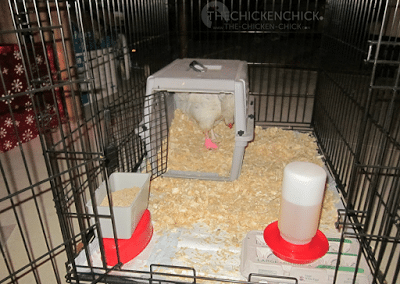 Wire sided pet crate