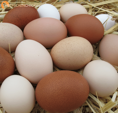 Brown eggshells contain the pigment protoporphyrin, ( a by-product of hemoglobin) which is found only on the surface of the shell. Brown pigment is applied during the formation of the last layer of the egg, the bloom or cuticle. The brown pigment can be rubbed off easily and does not color the inside of the shell.