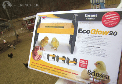 Wonderful Brinsea EcoGlow 20 Brooder Is A Safe Alternative To Dangerous Heat Lamps