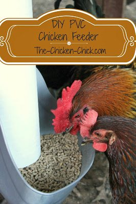 My homemade PVC feeder was ideal for Esther.