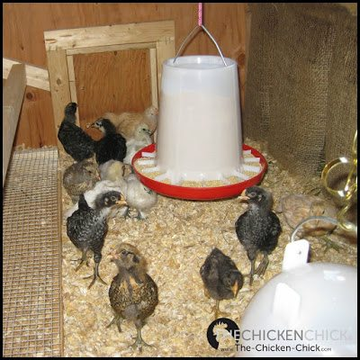 Nest Box Curtains in the Chicken Coop via The Chicken Chick®
