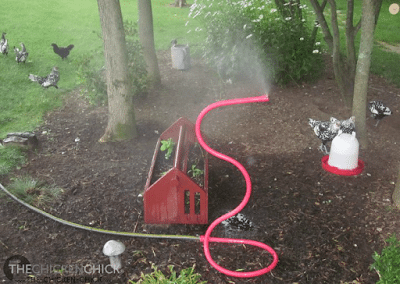 "Employ misters in shady areas of the chicken yard. Misters work by ""flash evaporation"" to cool the air."