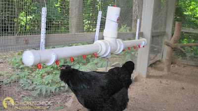 If possible, utilize a poultry nipple watering system to ensure a clean, fresh, cold supply of water to chickens at all times.
