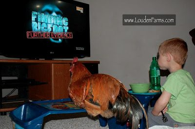 you have 6 hens that watch television with your family every night!