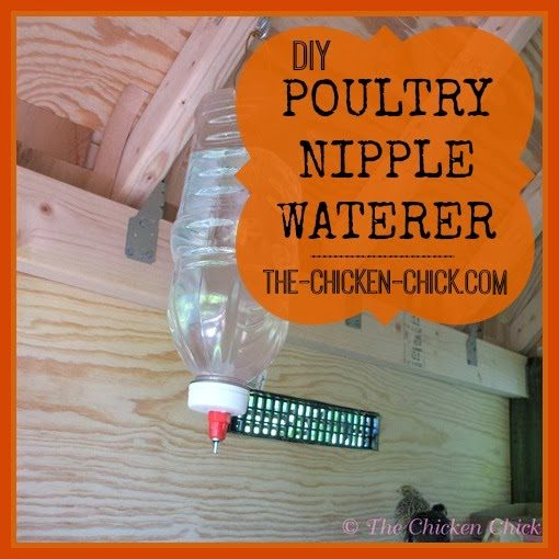 With the addition of quail to my backyard poultry collection recently, I found that they are particularly messy and that keeping the water clean was a constant challenge. This challenge inspired me to make some poultry nipple waterers (PNW) for them.