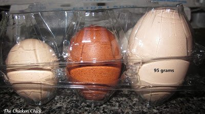 Excessively large or misshapen egg
