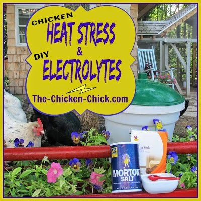 Heat stress is a very serious situation for chickens and can quickly go from serious to deadly.