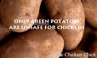 Chickens should not eat GREEN potato skins. The green color indicates the presence of solanine, a toxin that affects the nervous system when consumed in large quantities.