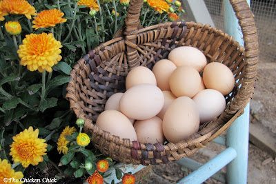 Given that shipped eggs tend to be slightly older than locally gathered eggs and have been handled significantly more, (and who knows how roughly) one should not expect a hatch rate greater than 50%. I like to order two to four times the number of hatching eggs as the number of hens I hope to add to my flock.