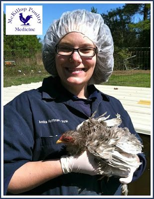 "Maryland Poultry Veterinarian, Dr. McKillop, DVM, MSpVM, DACPV states, ""Sand is a wonderful litter/ground source for backyard poultry. I advise all of my clients to go from shavings to sand."""
