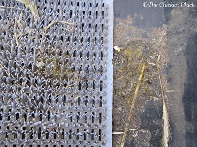 Evidence that there is an egg eater is obvious when inspecting the nest boxes as there will be egg residue at the bottom. I use Kuhl nest box pads and nest liners for several reasons, one of which is for ease of cleaning the nest boxes and identifying egg-eating chickens.