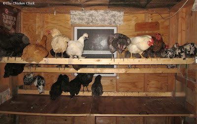 Utilizing droppings boards to collect those droppings is a simple and effective method for keeping the coop largely poop-free.