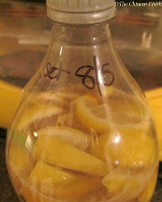 Date bottle and place in a convenient location that will be accessed daily as it must be shaken regularly, ideally several times daily.