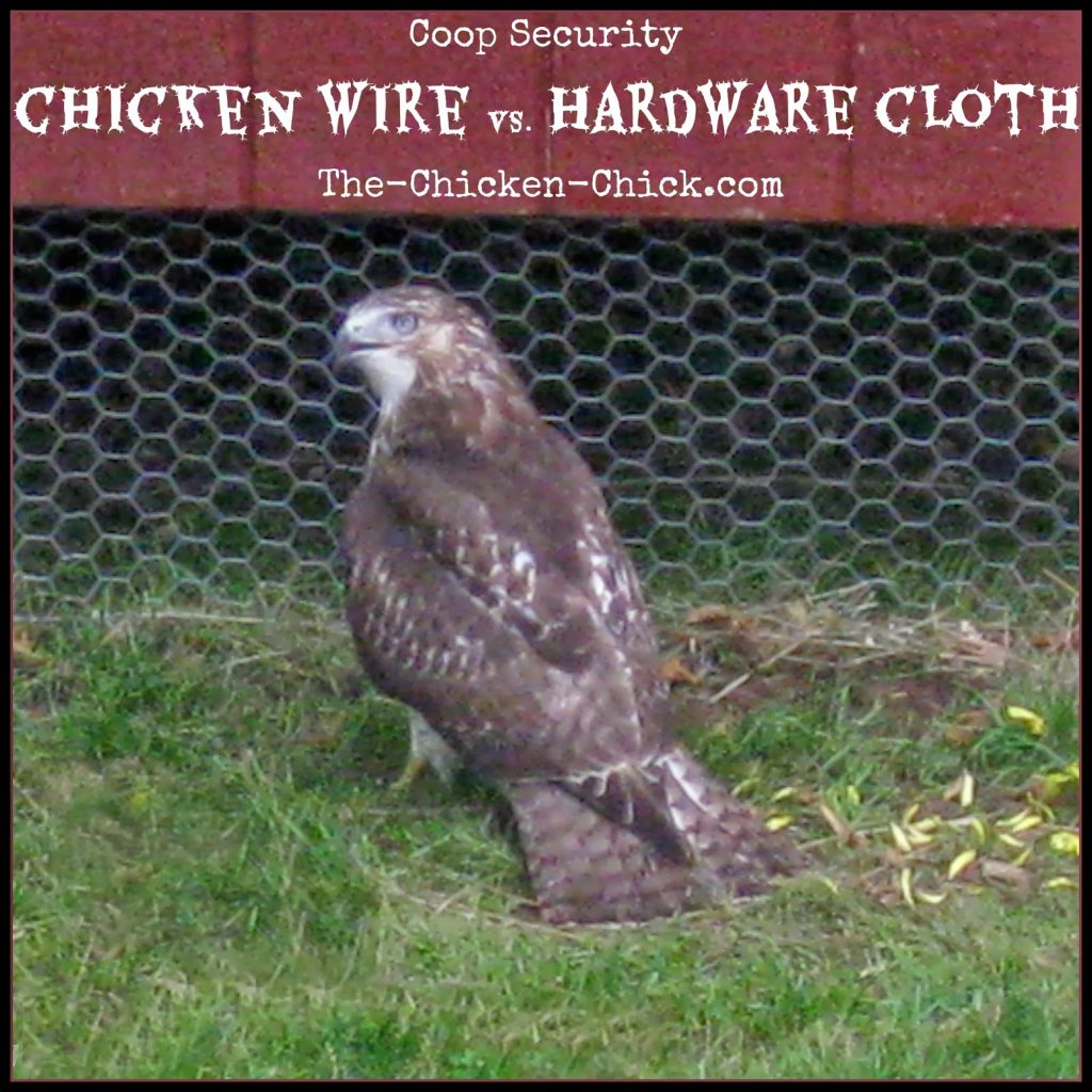 Coop Security: Hardware Cloth vs Chicken Wire   The Chicken Chick®