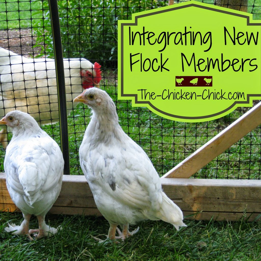 Learn how to go about introducing the newbies without bloodshed while minimizing stress in this article.