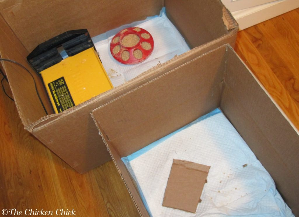 Cardboard boxes make great brooders for baby chicks, but boxes can make hanging poultry nipple waterers difficult.