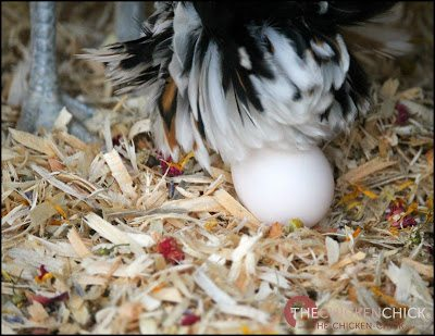 I add Spruce the Coop Herbal Fusion nest box herbs to my nest boxes; I appreciate the scent in the coop, but the aromatherapy benefits are primarily for my benefit, not my flock's.