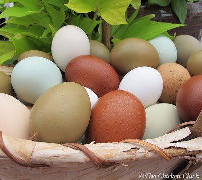 8 Tips for CLEAN EGGS from Backyard Chickens | The Chicken ...