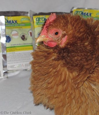 Probiotics: The Natural Choice for Healthy Chickens