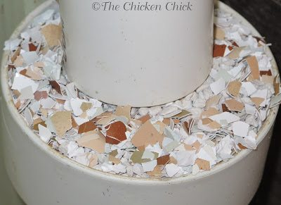 Supplemental calcium should be provided to laying hens in a separate hopper, apart from their feed. I mix oyster shell with crushed, clean eggshells in a hopper.