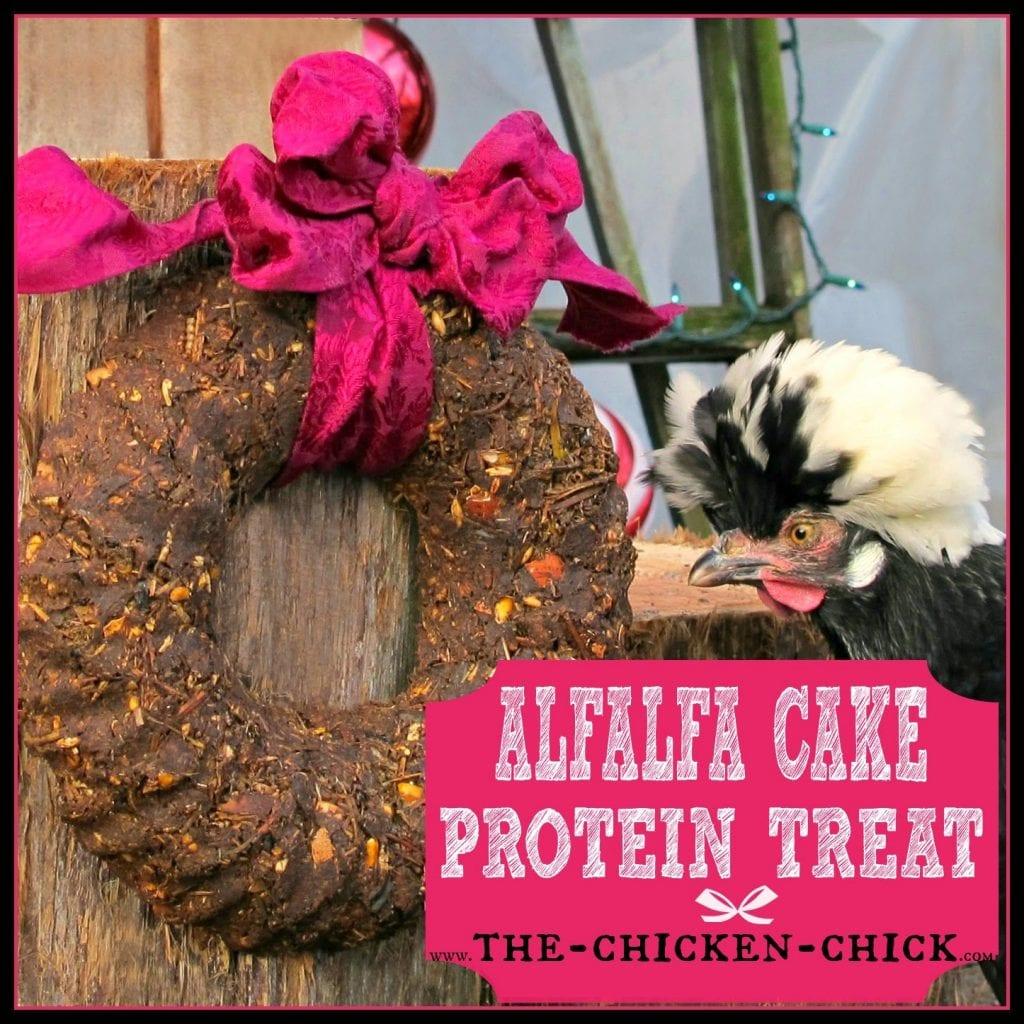 Alfalfa Cake Protein Treats for chickens