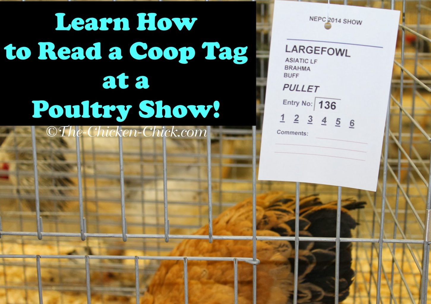 Northeastern Poultry Congress 3z Coop Tag The Chicken Chick 174
