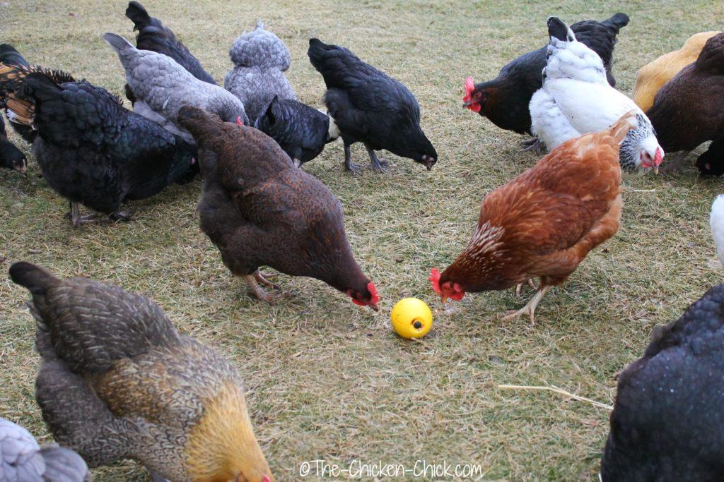 Fowl Ball Bowl 2014