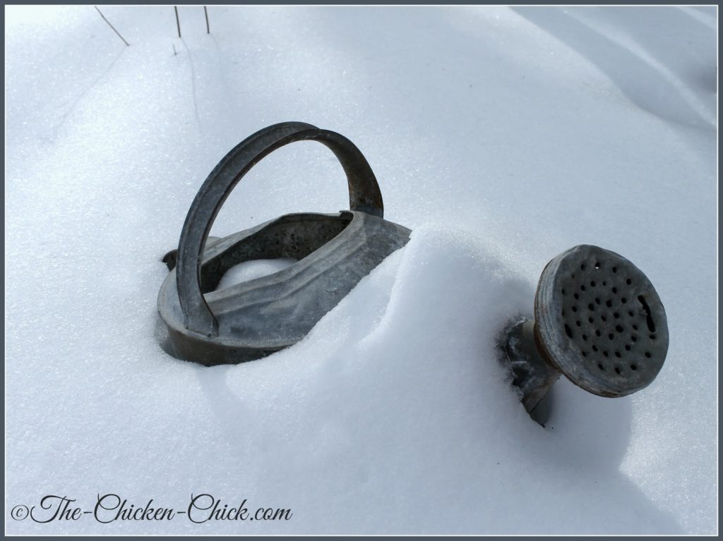 Snowy watering can.