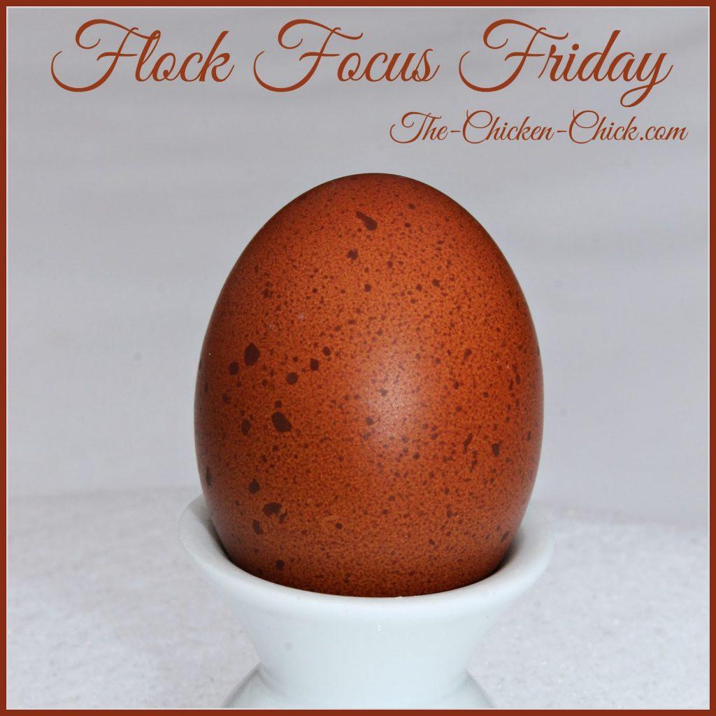 Black Copper Marans egg