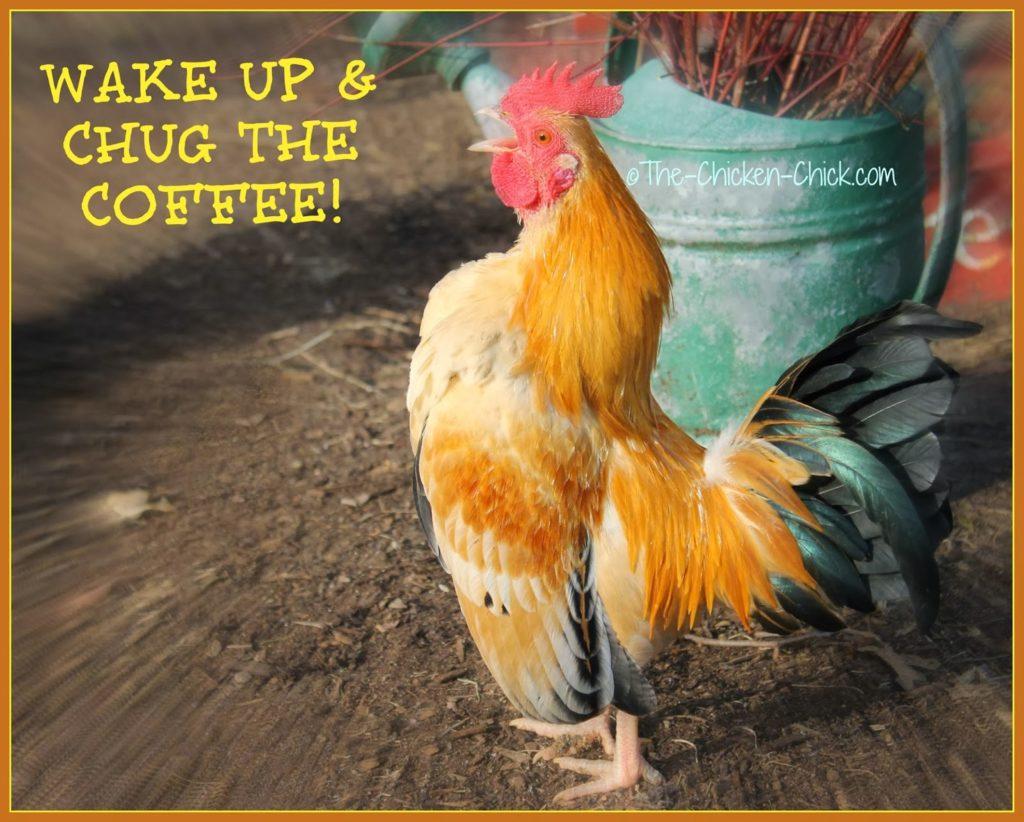 Wake up and Chug the Coffee!