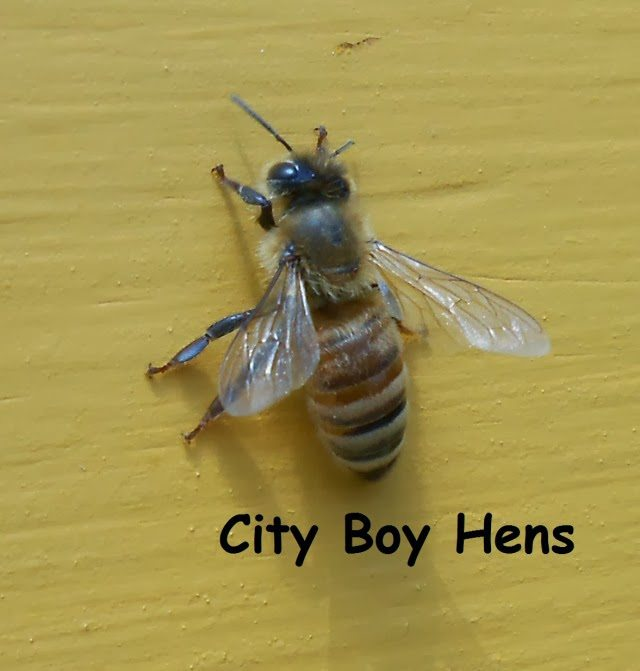 Why I'm glad I'm not a male honeybee