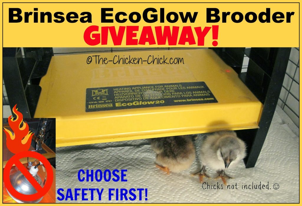 Brinsea EcoGlow 20 Brooder Giveaway!