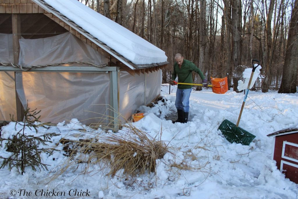Digging out the snow around the chicken coop.