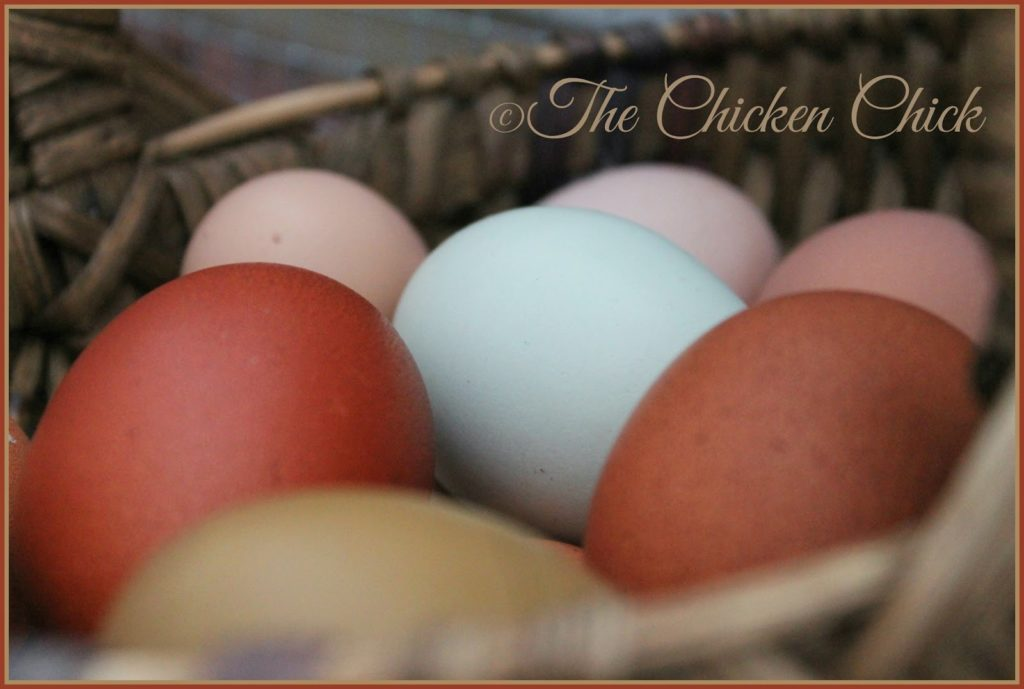 Basket of eggs at Flock Focus Friday at The Chicken Chick®