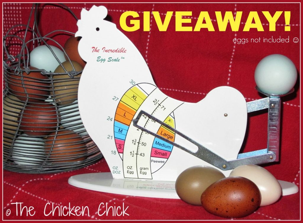 The Incredible Egg Scale Giveaway