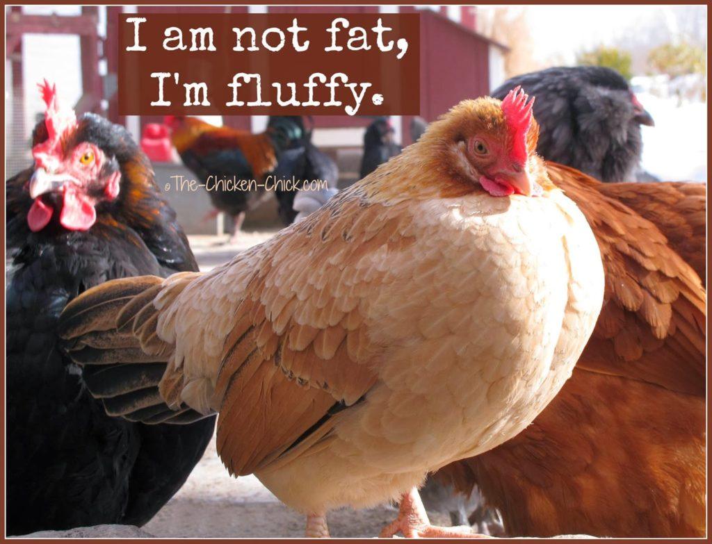 I'm not fat, I'm fluffy.