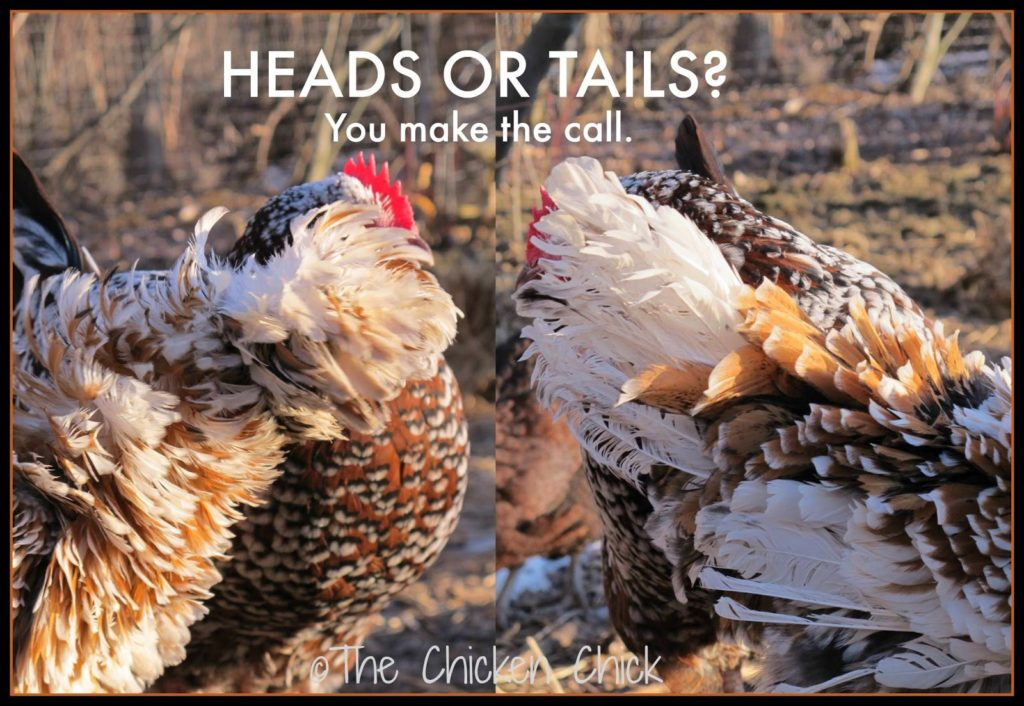 Heads or tails? You make the call.
