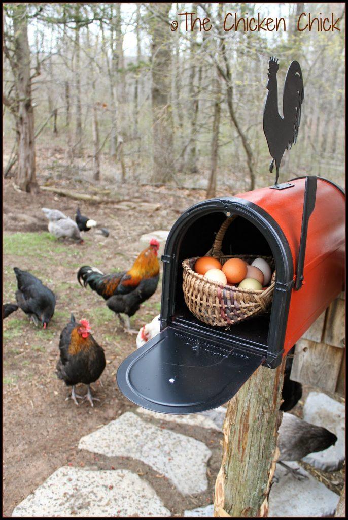 Chicken Coop mailbox.