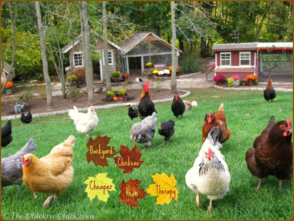 Backyard Chickens- Cheaper than therapy.