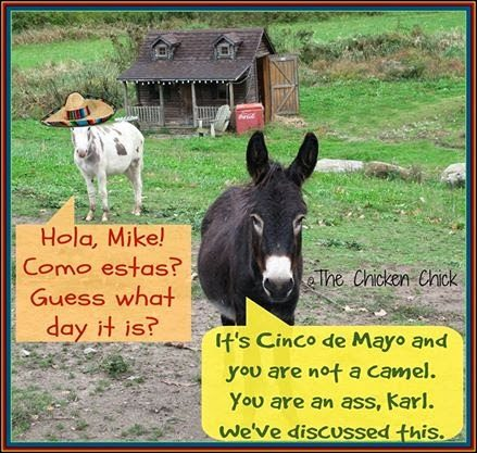 Cinco de Mayo donkeys.