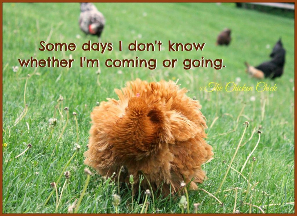 Some days I don't know whether I'm coming or going.