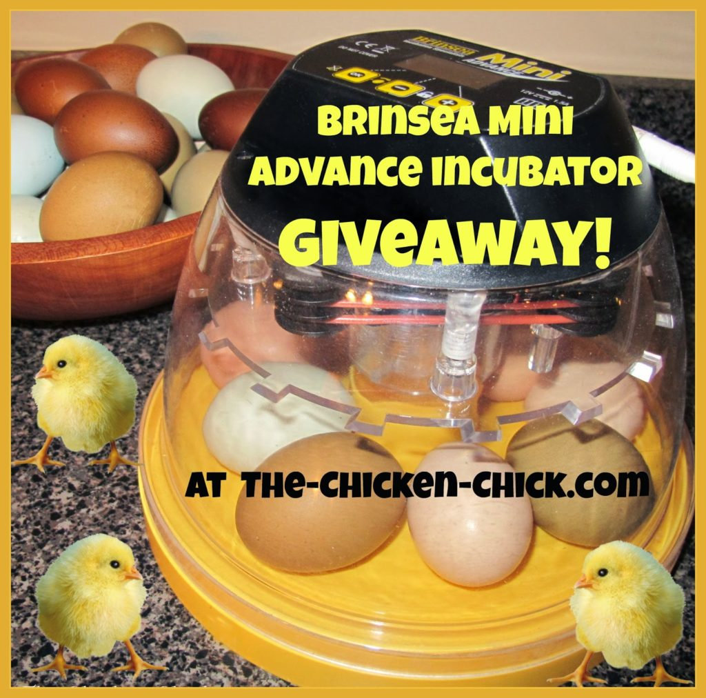 Brinsea Mini Advance incubator giveaway at www.The-Chicken-Chick.com