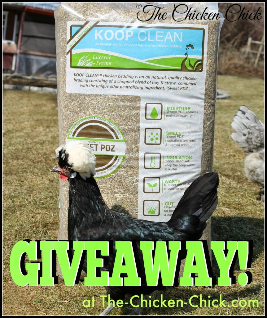Enter to Win a bag of Koop Clean chicken bedding at www.The-Chicken-Chick.com