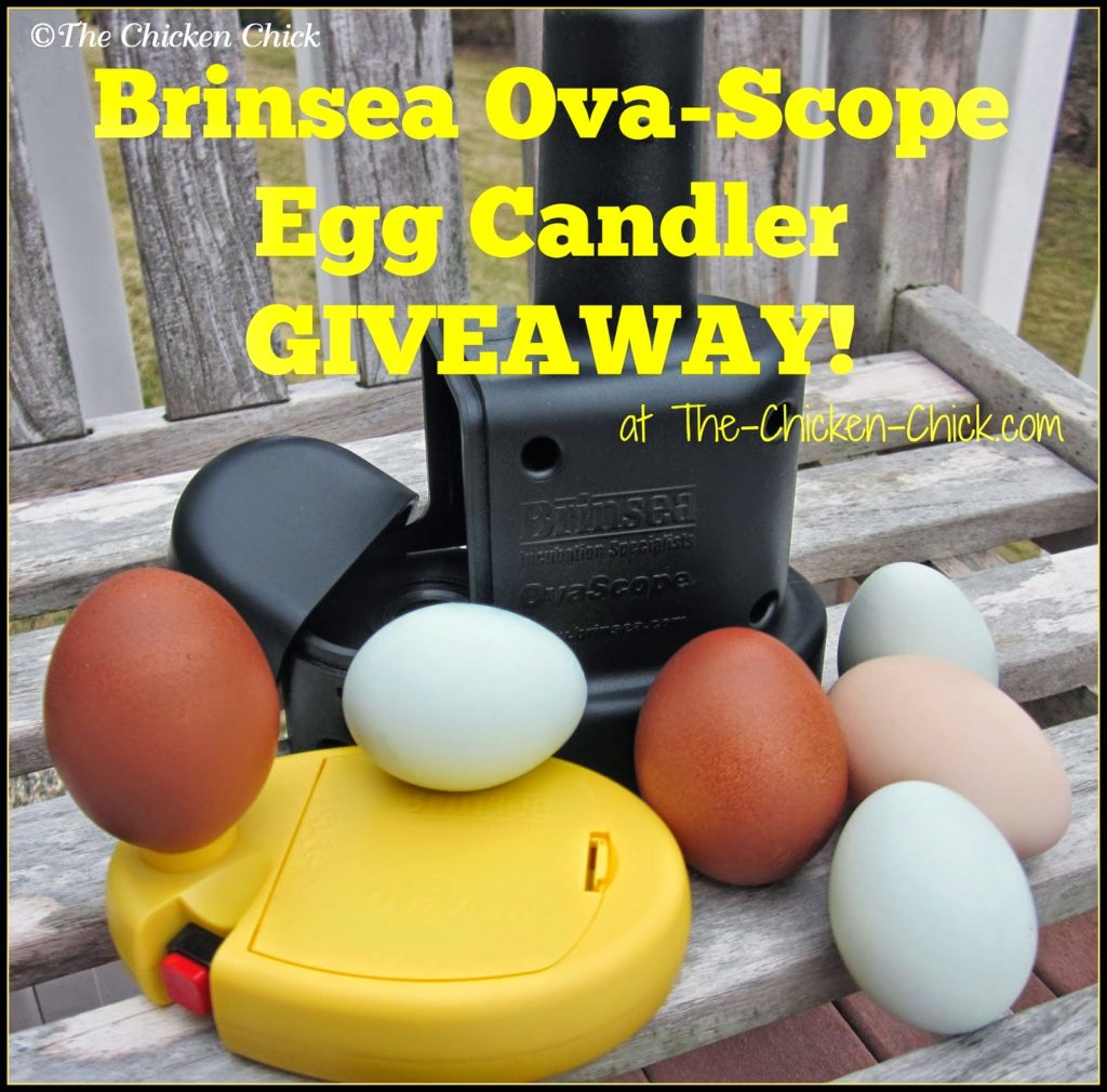 Brinsea Products OvaScope Egg Candler Giveaway at www.The-Chicken-Chick.com