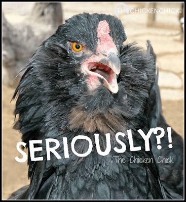 any time someone suggests a fail-proof, do-it-yourself method of chick sexing, ask yourself whether commercial hatcheries are using it. If not, you can be quite certain it is either not accurate, not cost-effective or just plain silly.