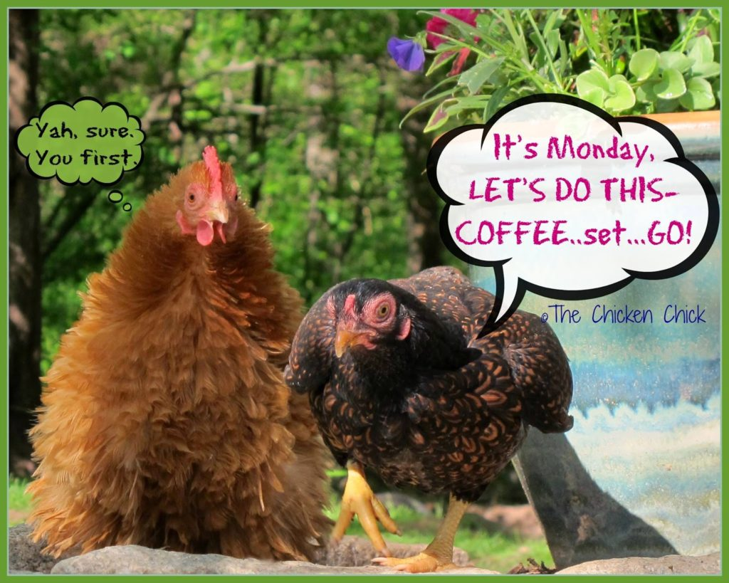 It's Monday, LET'S DO THIS- Coffee...set...GO!