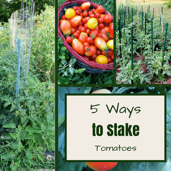 5 Ways to Stake Tomatoes, shared by The Free Range Life