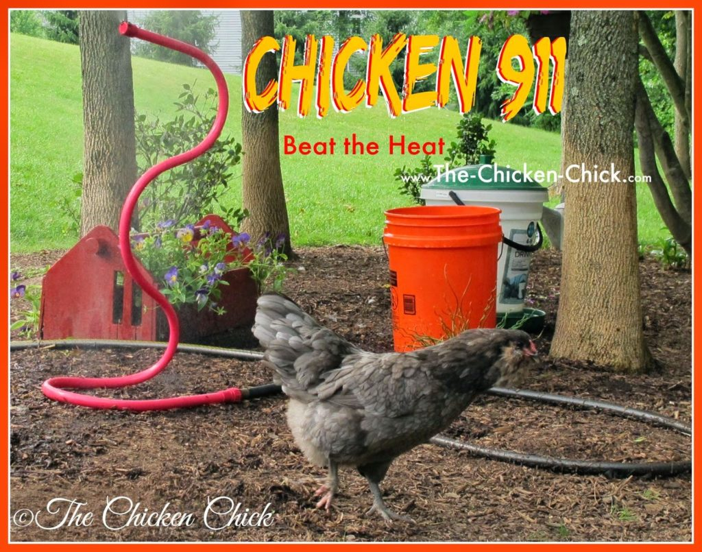 lots of suggestions for keeping chickens safe in the heat this summer here.